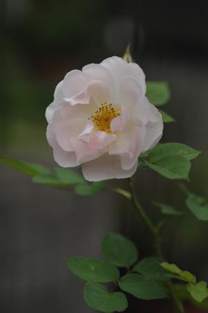 peachb2011625-2.jpg