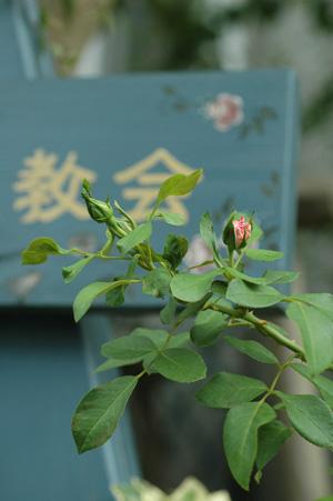 rosen2012830-1.jpg