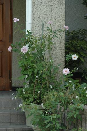 roses20121008-2.jpg