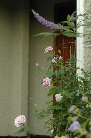 roses20121010-2.jpg