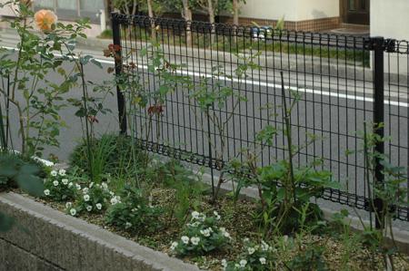 roses20121031-1.jpg