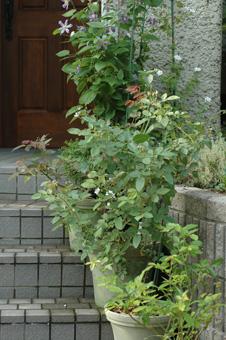 roses20121031-3.jpg