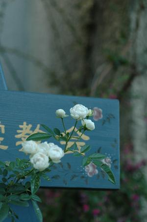shune20121005.jpg