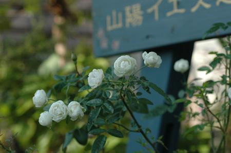 shune20121106.jpg
