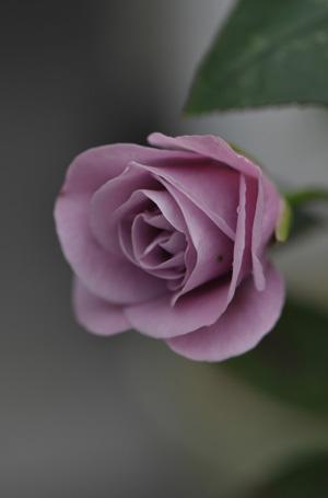 tasogare20121130-3.jpg