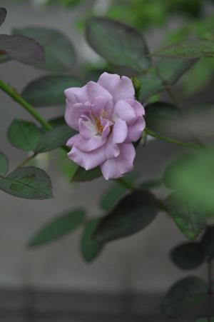 tasogare2012628.jpg