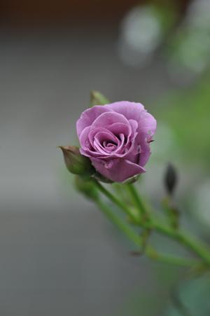 tasogare2012630-1.jpg