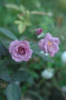 tasogare2012927.jpg