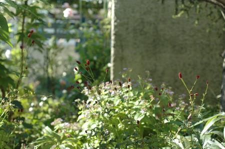 waremokou20121010-1.jpg
