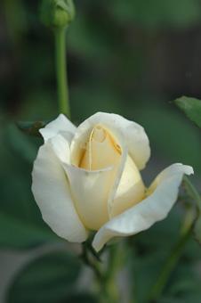 white20121005-1.jpg