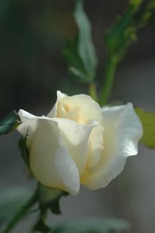 white20121005-2.jpg
