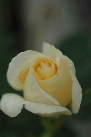 white20121010.jpg