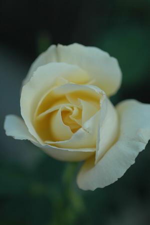 white20121012.jpg