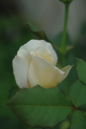 white2012930.jpg