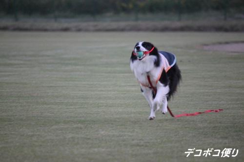 20141127 抜釘手術 その1-4