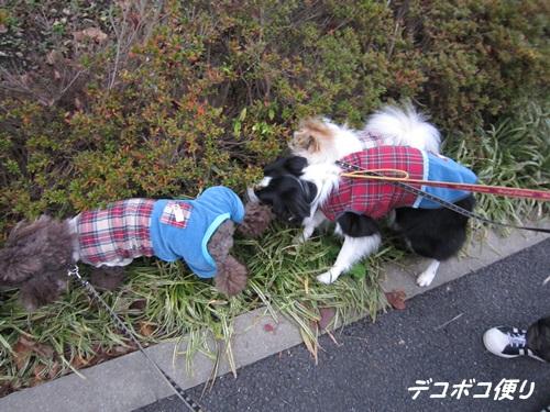 20141129 お揃い服でお散歩5