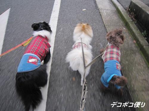 20141129 お揃い服でお散歩8