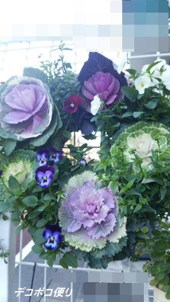 20141203 お花もいろいろ1