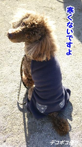20141207 寒くてもお散歩大好き!4