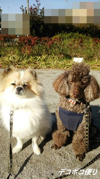 20141207 寒くてもお散歩大好き!5