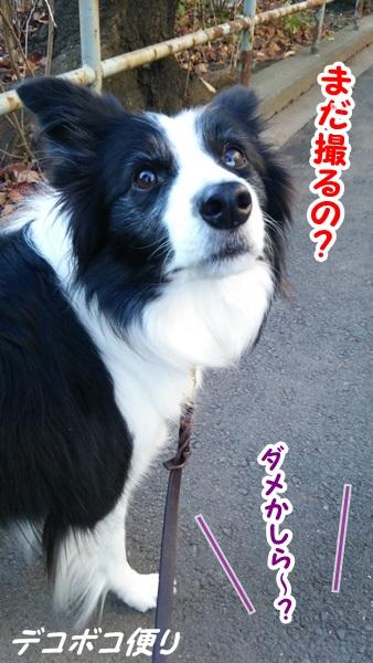20141208 散歩三昧♪3
