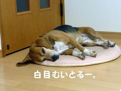 ◆P1150970