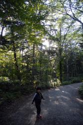 時化たら森探検