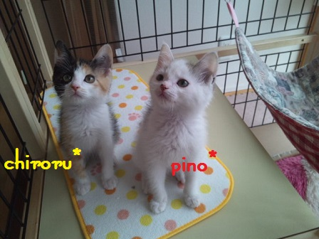 chiroru7.jpg