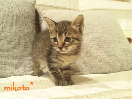 mikoto2.jpg