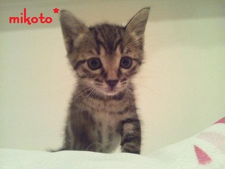mikoto3.jpg