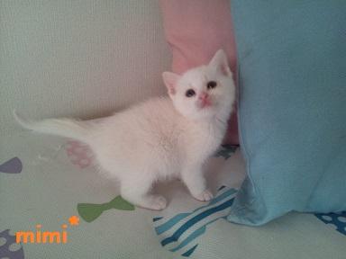 mimi6.jpg