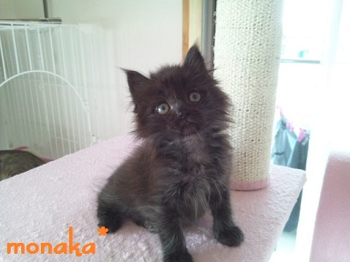 monaka5.jpg