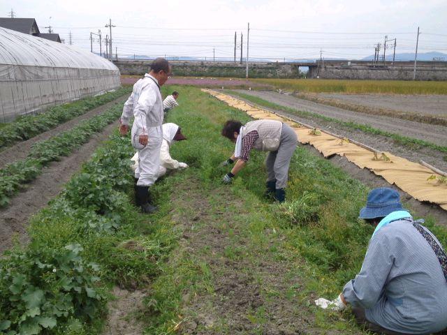 支援野菜畑