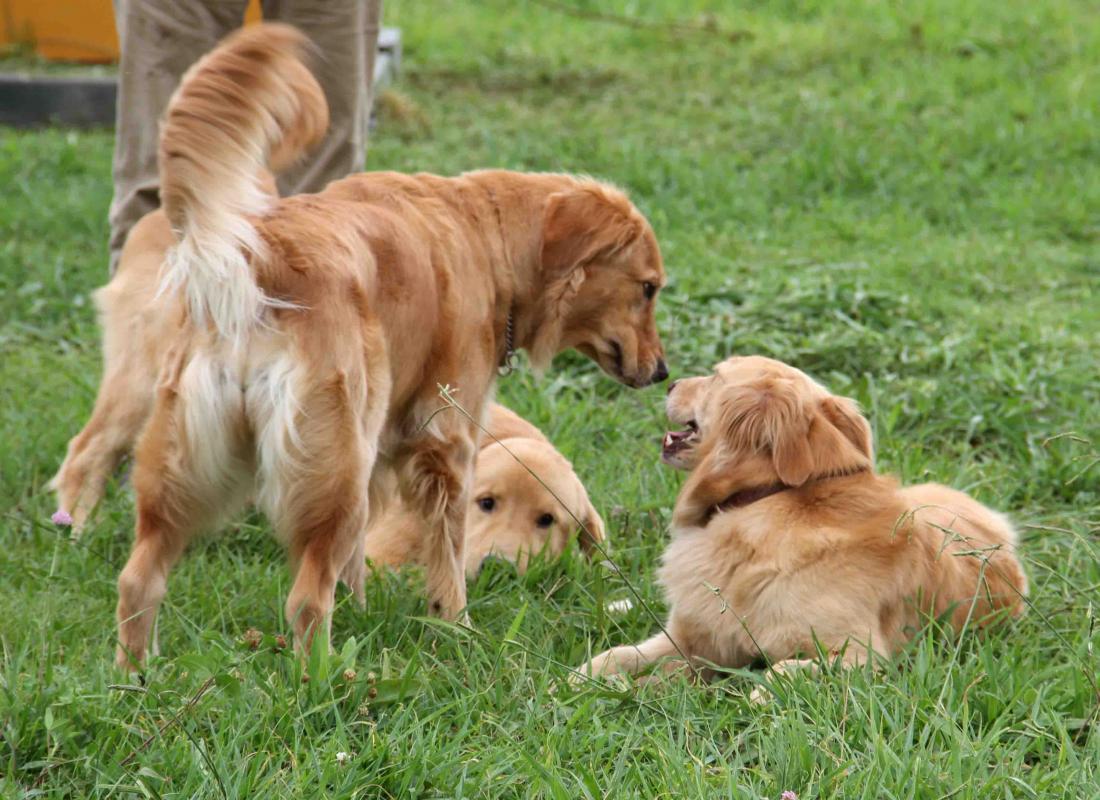 ヒットと年上犬(1)