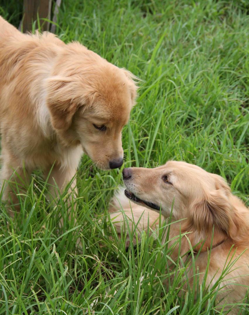 ヒットと年上犬(2)