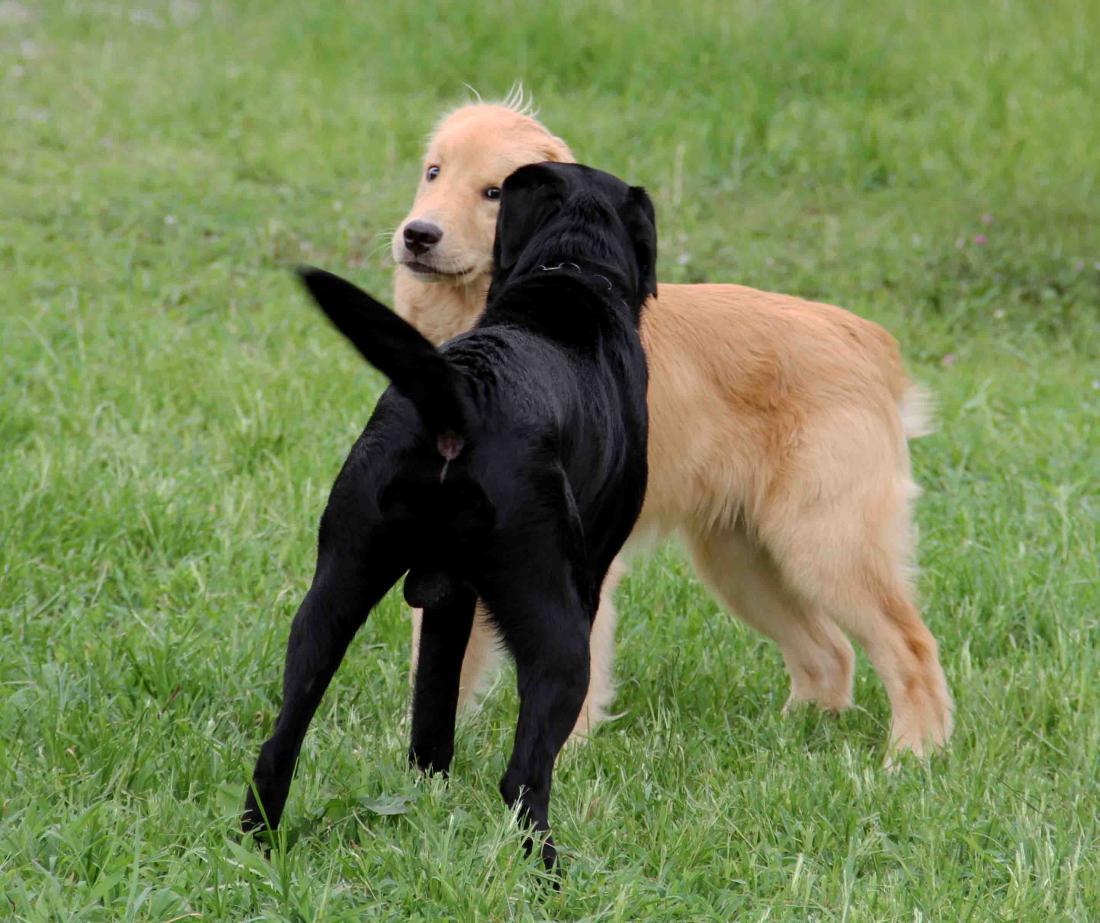 ヒットと年上犬(3)