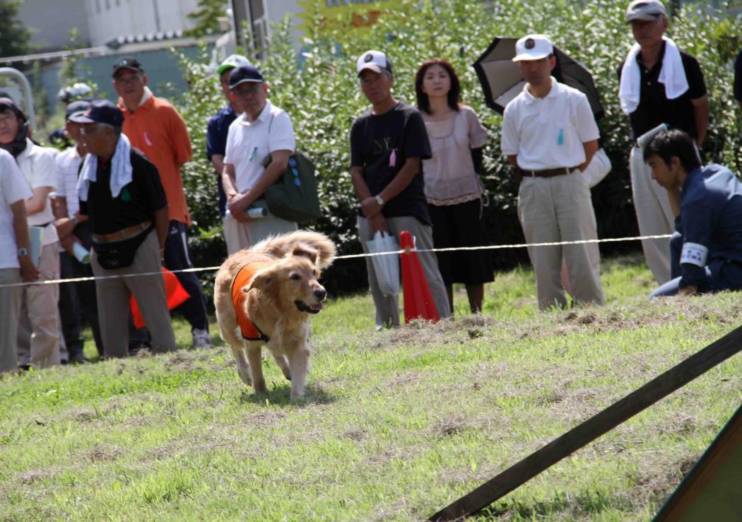 捜索犬デモ(3)