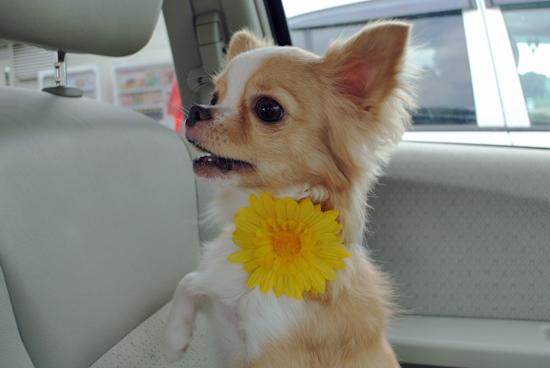 flower12091.jpg