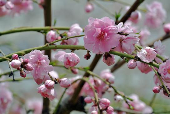 peach1204.jpg