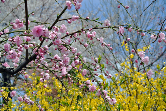 springcolor12041.jpg