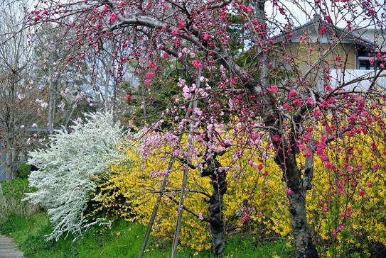 springcolor2.jpg