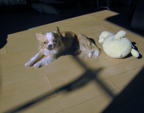 sunlight12031.jpg