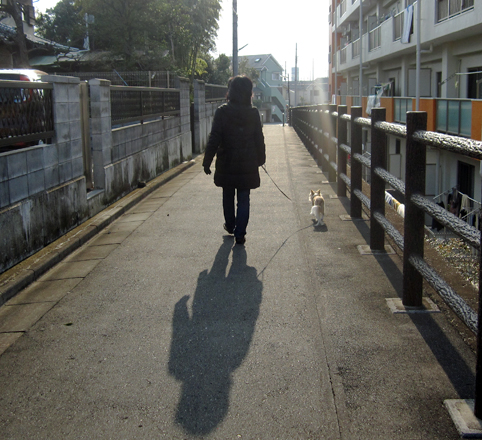walking1203033.jpg
