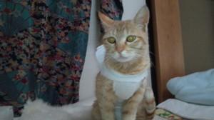 動物病院の先生の手作りのナース服よ。
