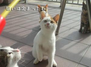 夢中みけちゃん