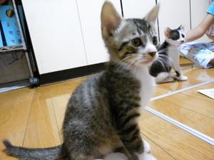 鼻黒トラ君 (1)