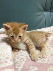 cat_22214_2.jpg