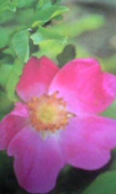 Image1085_20130227094452.jpg