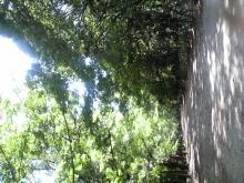 玲加のブログ-下賀茂神社