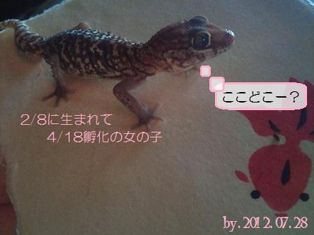 7/28 おウチの子にv